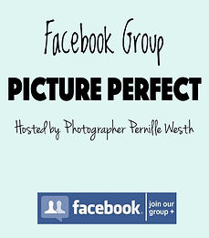 Picture Perfect cover wix.jpg