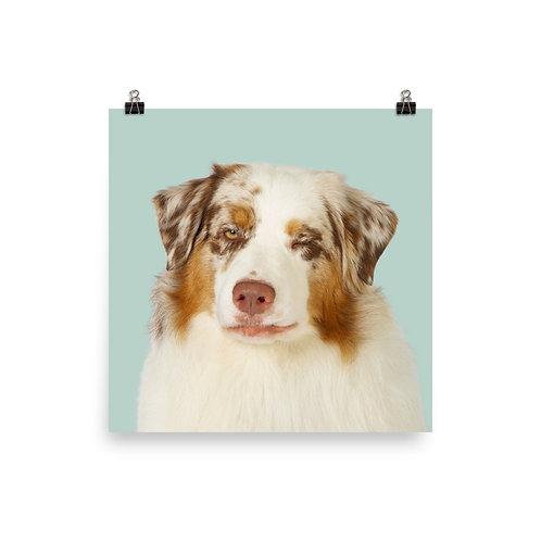 Art Print · Project 100 Dogs · Greg the Australian Shepherd