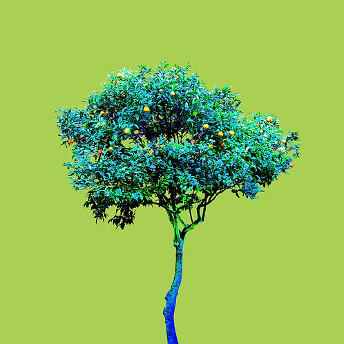 Tree no_3