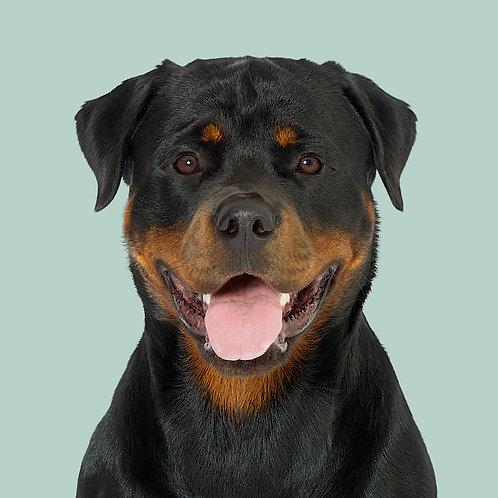 Fine Art Print · Project 100 Dogs · Zanka the Rottweiler