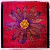 Vintage Flower Red Pernille Westh.jpg