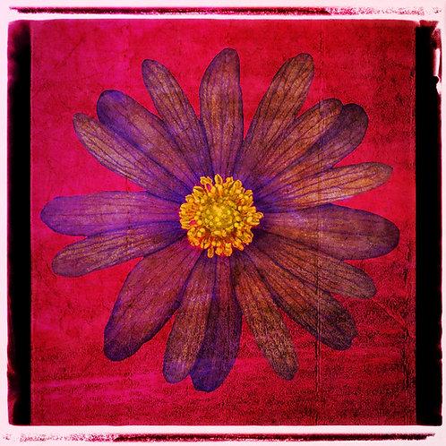 Vintage Flower · Red
