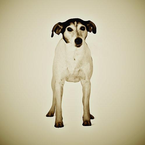 Animal Series · Dog