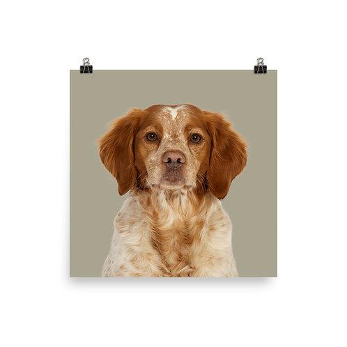 Art Print · Project 100 Dogs · Belis the Breton