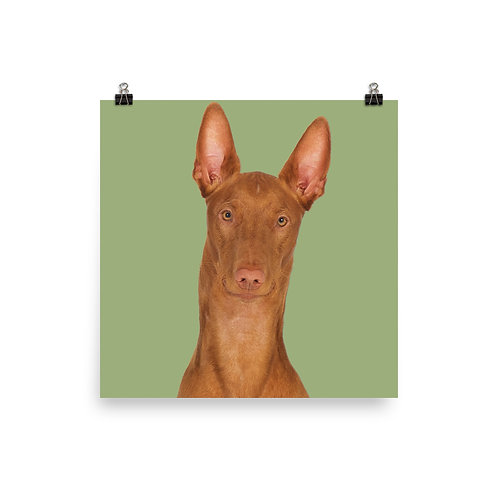 Art Print · Project 100 Dogs · Diablo the Pharaoh Hound