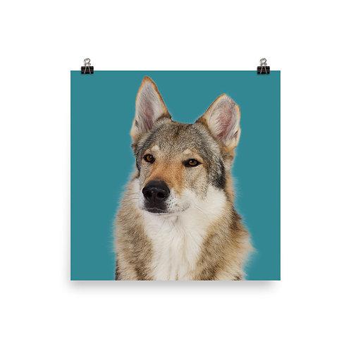 Art Print · Project 100 Dogs · Uno the Ceskoslovenský Vlciak