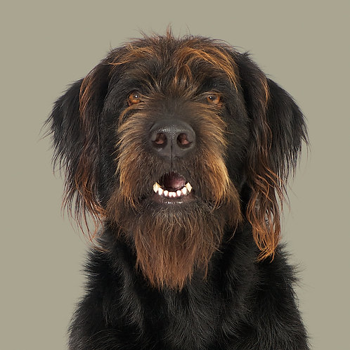 Fine Art Print · Project 100 Dogs · Rufus the Cross-breed