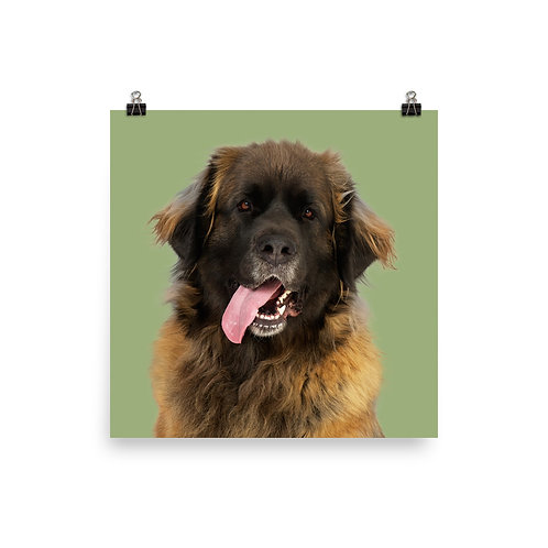 Art Print · Project 100 Dogs · Zookie the Leonberger
