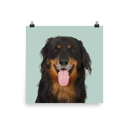 Art Print · Project 100 Dogs · Cæsar the Hovawart