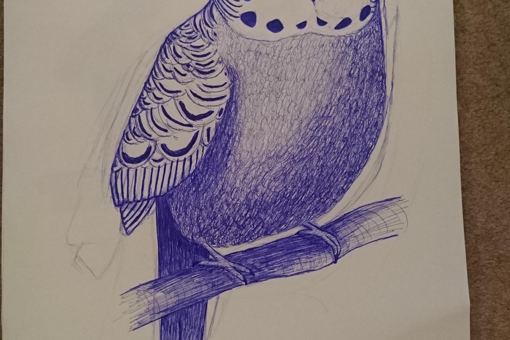 Teddy Sketch 2