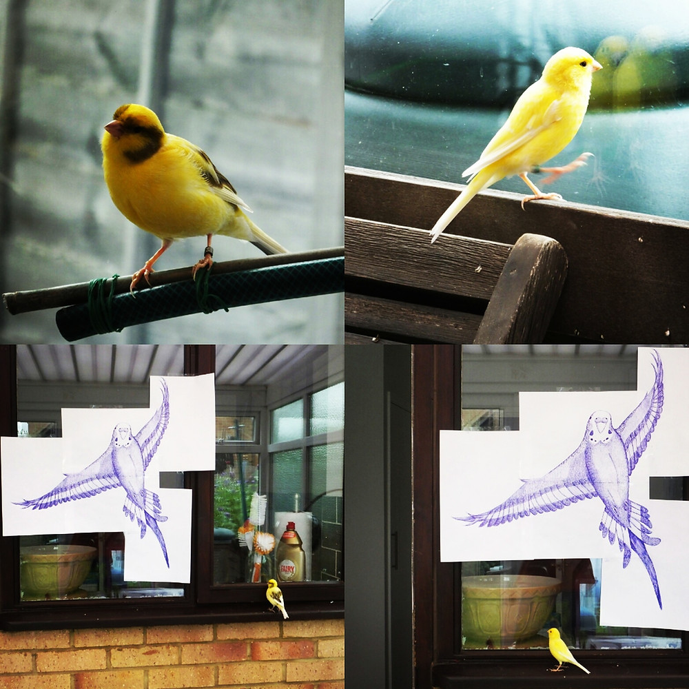 Canaries having a sneak peek of the next Jenny K Home budgie artwork