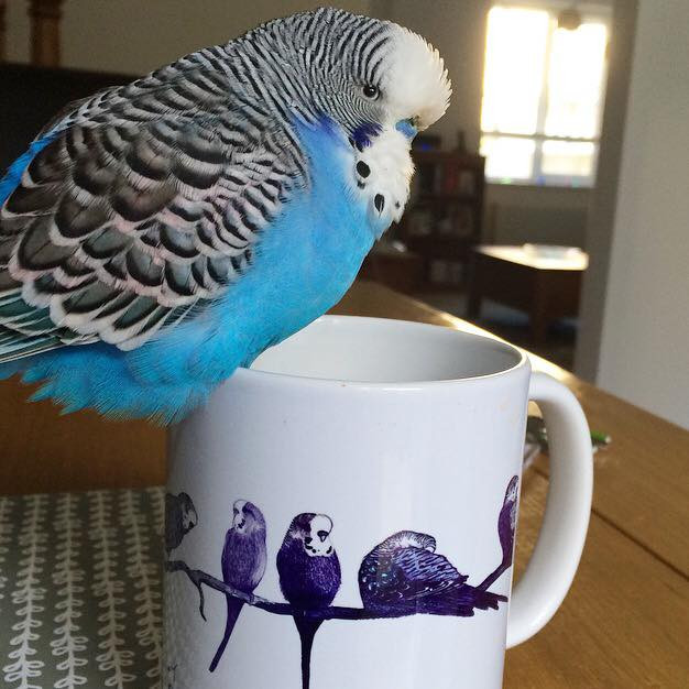 Pippy the Budgie Bird approves of Jenny K Home Budgie Mugs