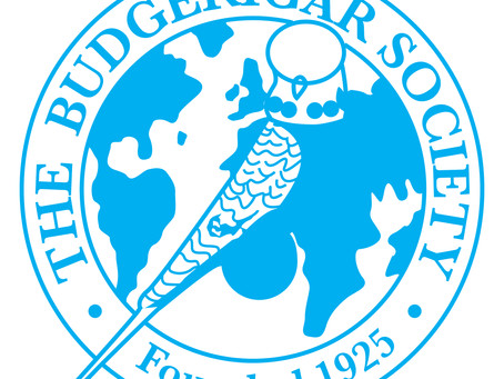 Supporting the UK Budgerigar Society