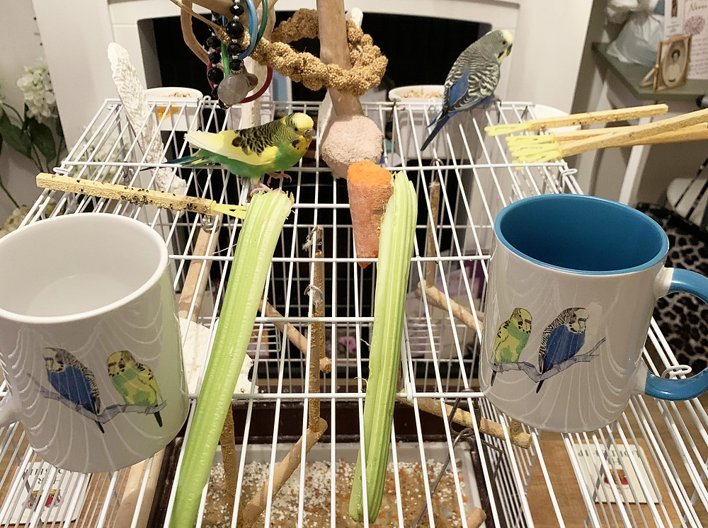 Budgies featured on Jenny K Home budgerigar mugs