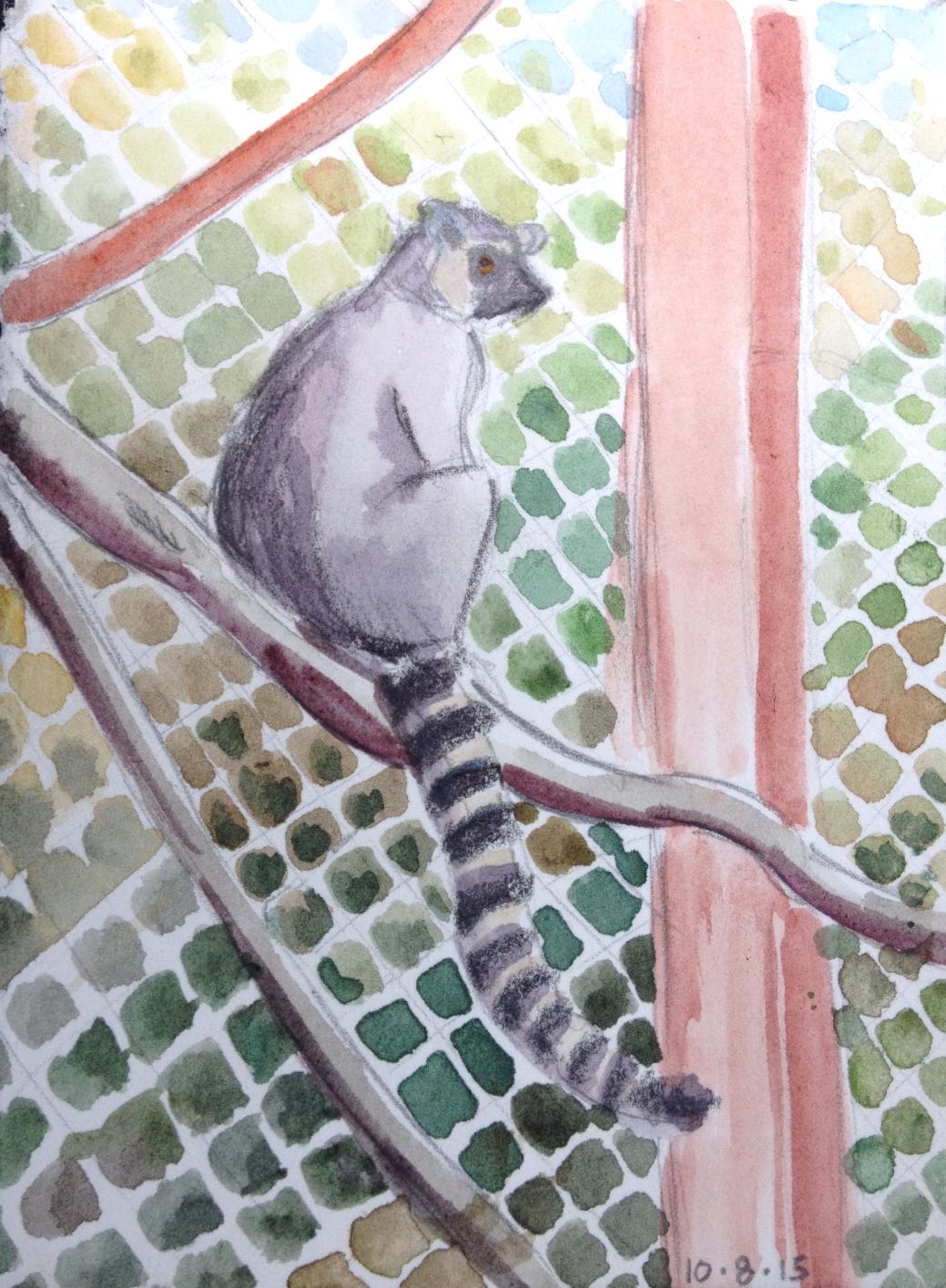 """""""Ring-tailed Lemur"""""""