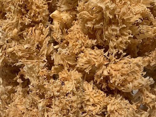 Gold chrondus Crispus sea moss gel