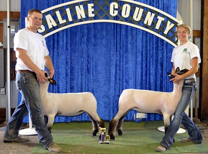 Champion Pair Market Lambs