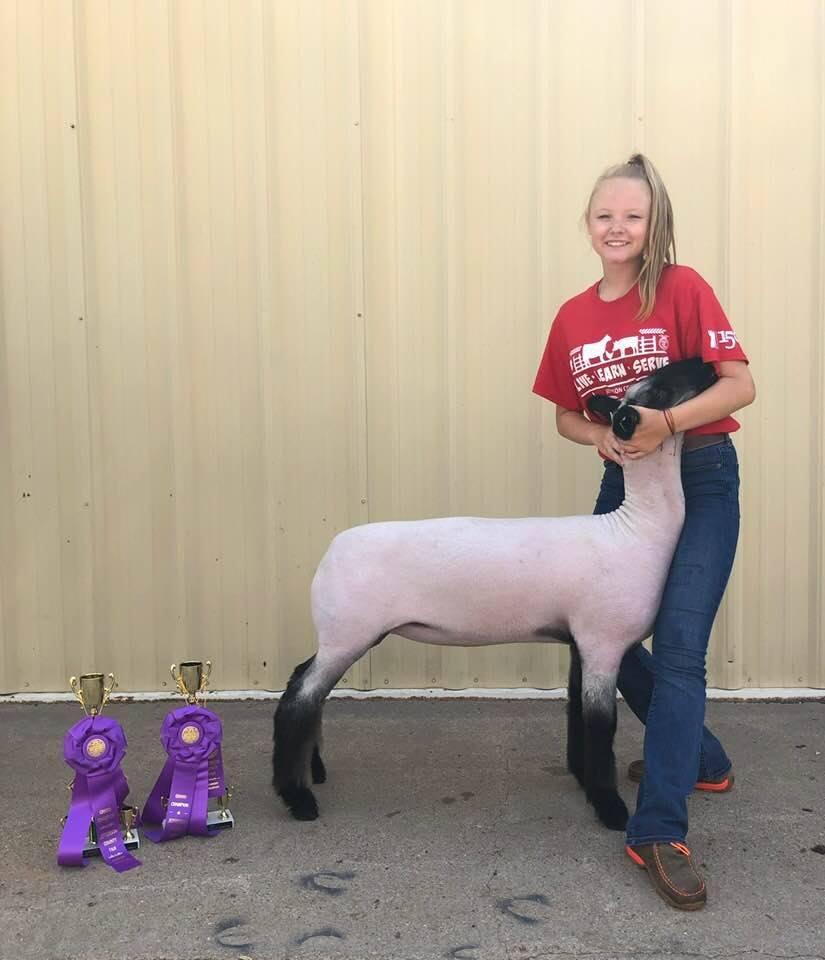 Champion Market Lamb
