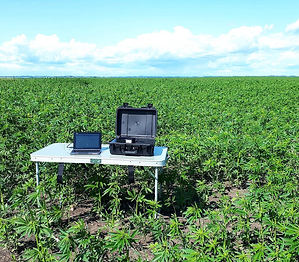 field photo.png
