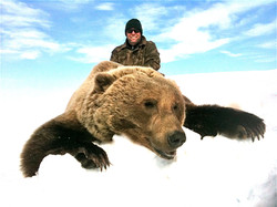 Monster Brown Bear Alaska