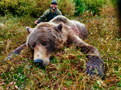 Largest Grizzly Bear Shot - 2