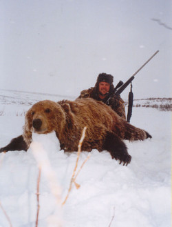 Giant Brown Bear Alaska