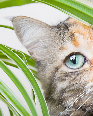 why-do-cats-eat-plants-and-should-i-be-w