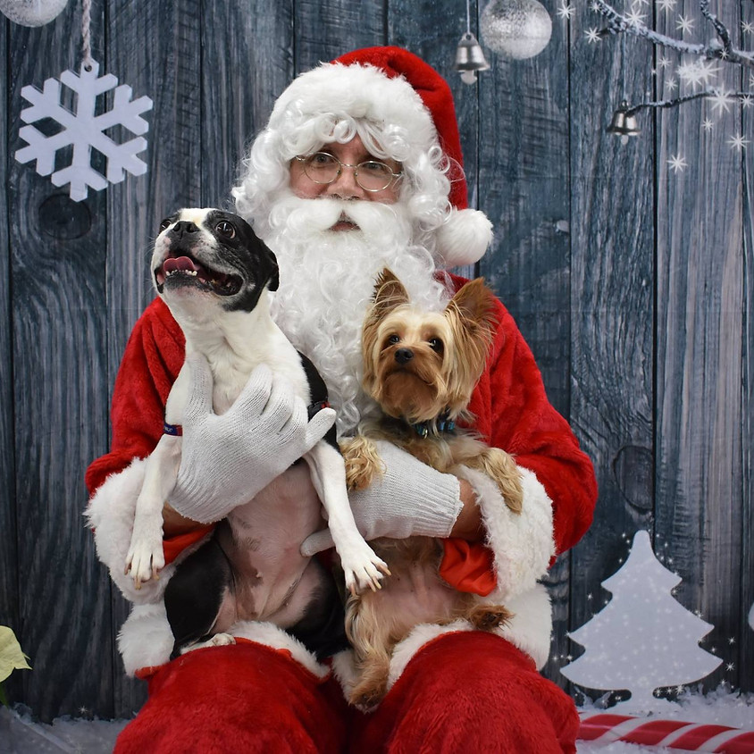 Pet Portraits with Santa