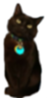 Kitty_Picture3.png