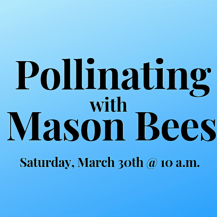 Pollinating with Mason Bees