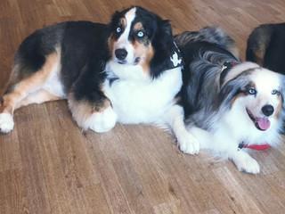 Skylar & Baxter