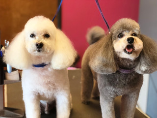 Teddy & Belle