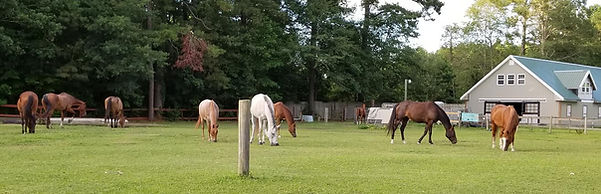 Horses of Thisldo Farm