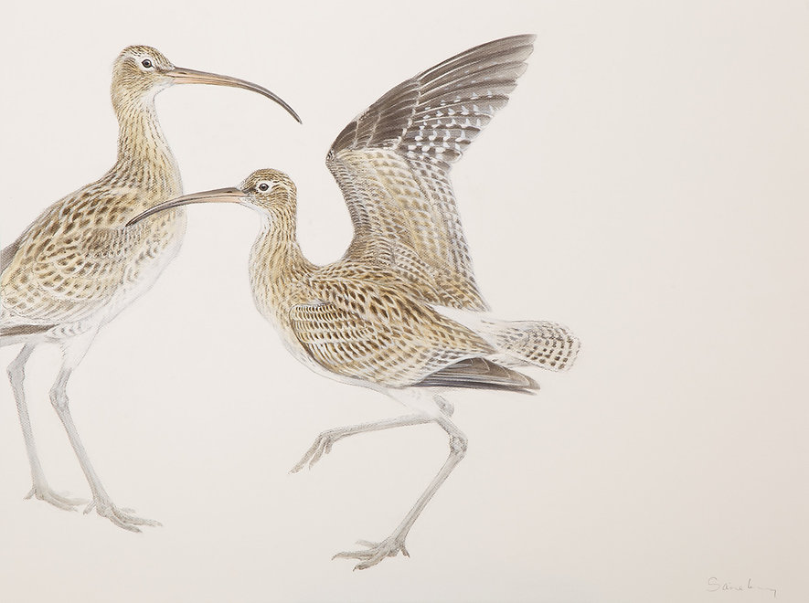 Curlews Charcoal and watercolour 60 x 80