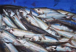 Mackerel, watercolour & mixed media  36x