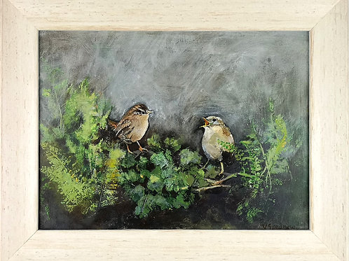 Chattering Wrens