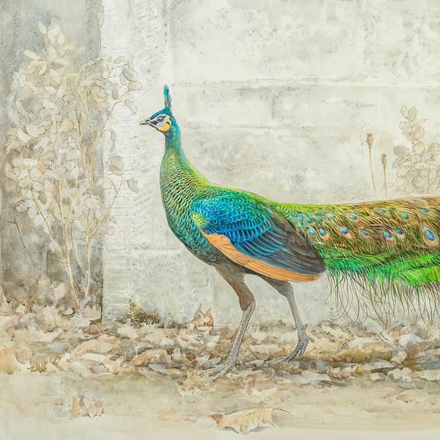 Javanese-Green-Peacock