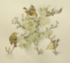 Goldcrests and lichens 12 x 13 inches (1