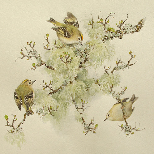 Goldcrest and lichens