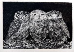 Little Owls Sheila Roberts.....jpg