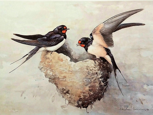 Returned safely – swallows