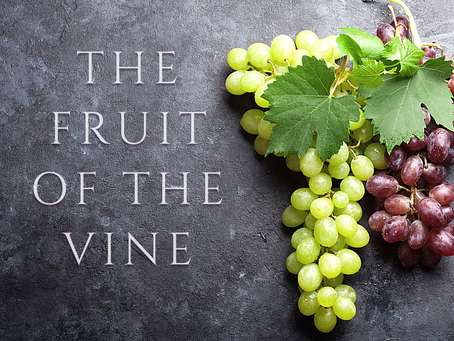 The Fruit of The Vine - Exploring Passover Elements