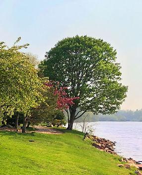 Treeswebterrace.jpg