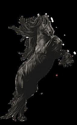 DHFA Horse
