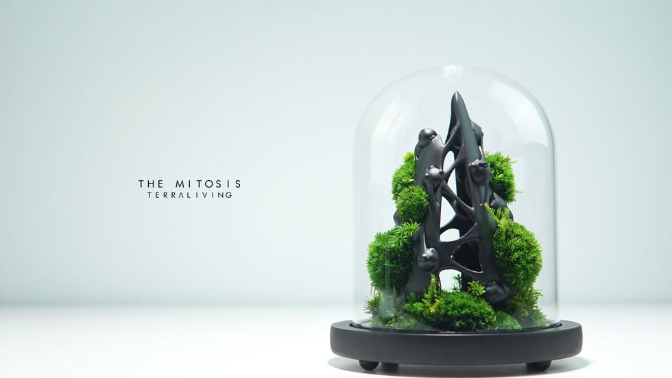 mitotis-terraliving_5.jpg
