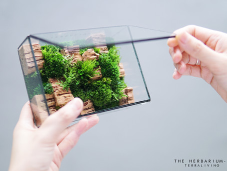 Moss Specimens Collection that won't wilt, The Herbarium - S Preserved Moss Terrarium by TerraLiving