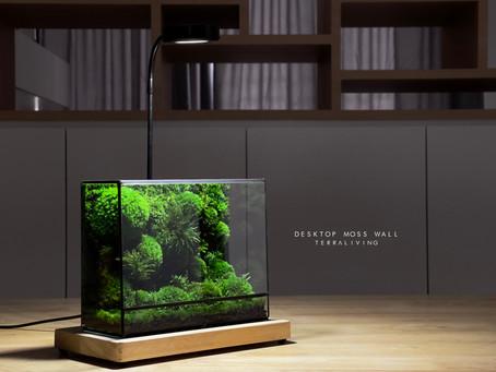 Desktop Moss Wall Terrarium by TerraLiving