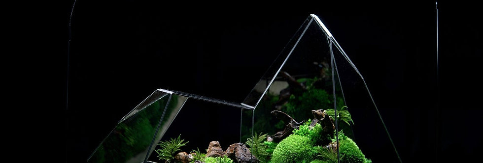 The Terragon - X ZERO, Heart of Forest, TerraLiving Botanical Sculpture