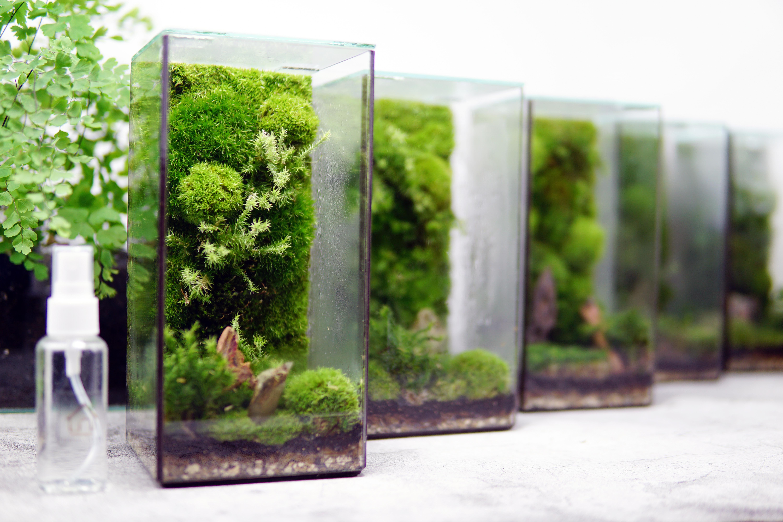Pillar of Moss