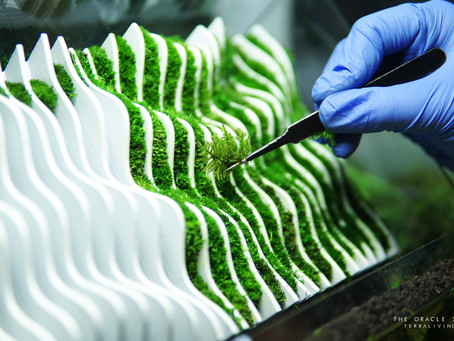 """Behind the scenes of """"The Oracle 2.0"""" parametric sculpture, a preserved moss wall terrarium"""